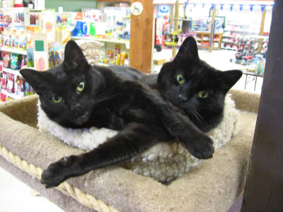 onyx & jett - Sidney Location pets